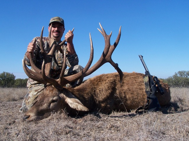 red stag 6 nice
